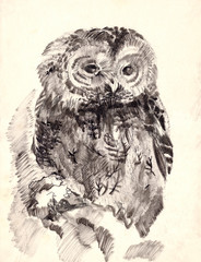 owl brush drawing sketch