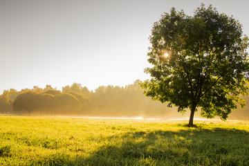 Дерево в утреннем тумане