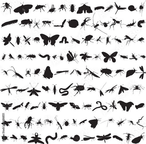 set of more than a hundred insects