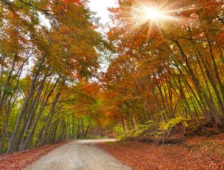 Colorful autumn landscape in the forest with old road