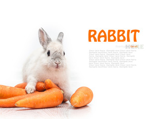 white rabbit and a carrot