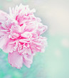 romantic floral background in vintage style