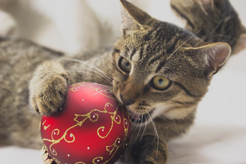 Kitten with christmas ball