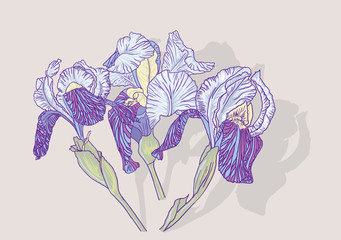 Background with  iris flowers. Vector illustration.