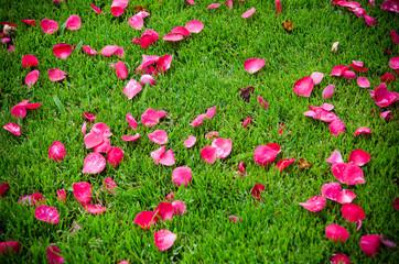 Petals carpet