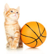 Cute little red kitten and basketball isolated on white