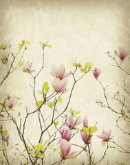 magnolia flower with Old antique vintage paper background