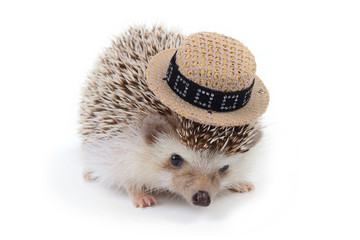 Little hedghog with samll hat.