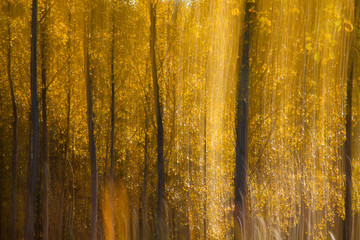 autumnal forest abstraction