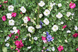 Beautiful artificial green hedge with white, pink, blue flowers.