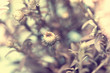 vintage photo of delicate white aster
