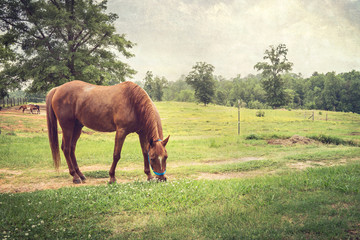 Chestnut Horse in Rural Setting