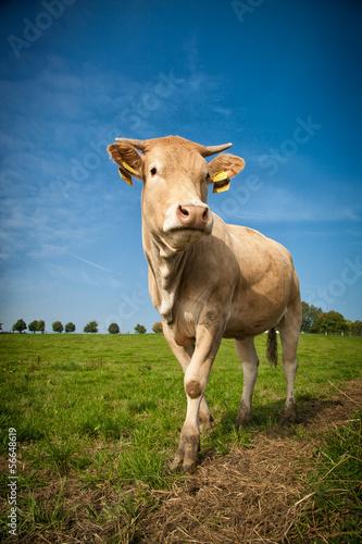 Aluminium Kühe auf der Wiese