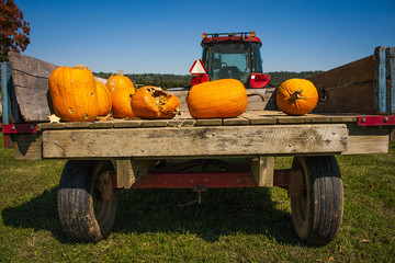 Tractor bed with pumpkins