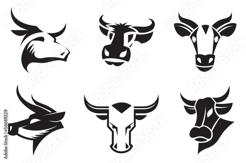 collection of six cows heads