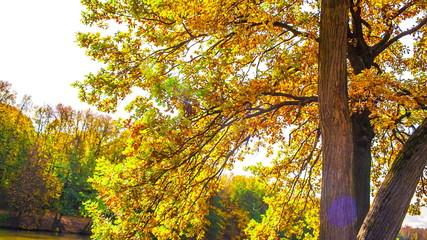 Oak tree by lake