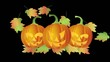Halloween Candle Lit Carved Pumpkins with Falling Autumn Leaves