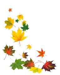 Herbstlaub vor weißem Hintergrund