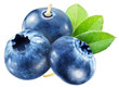 Blueberries with leaves. File contains clipping paths.