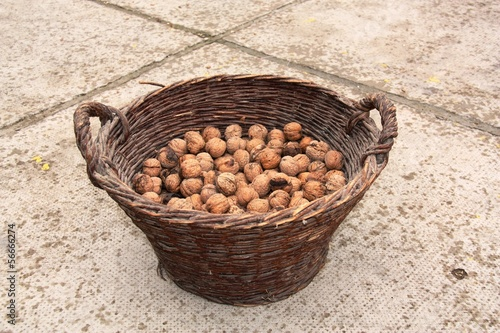 Walnuts in a basket (Orasi u košari)