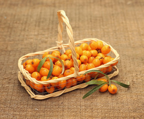 Useful sea-buckthorn berries in basket