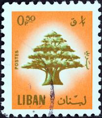 Cedar of Lebanon (Lebanon 1974)