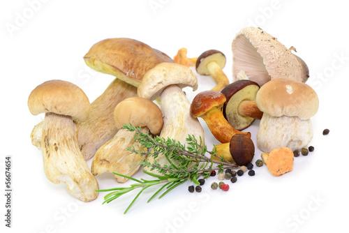 Leinwanddruck Bild Pilze, Pfeffer