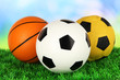 Sport balls, on green grass, on bright background
