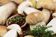 Kochen mit Pilzen
