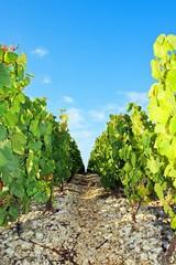 Chemin pierreux près des vignes (Bourgogne France)