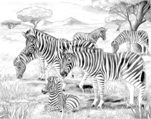 Safari - zebras - coloring page