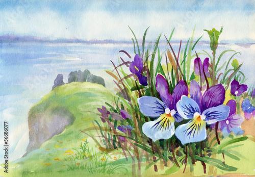 wiosna-fiolek-kwitnie-na-gorze