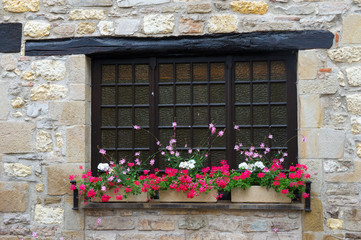French window with plants in containers