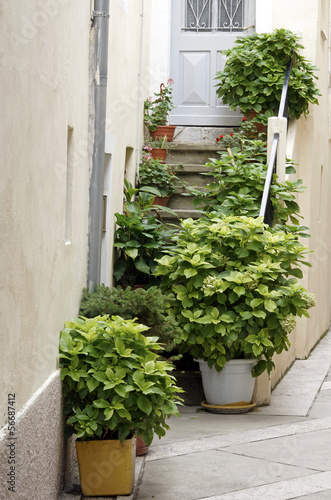 Plants in pots on the stairs of a house