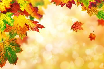 Herbst Bokeh Hintergrund verziert mit buntem Laub