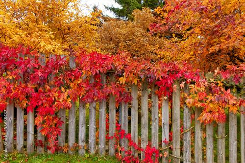 Fotobehang Tuin Herbstgarten