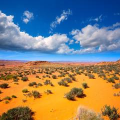 Arizona desert near Colorado river USA