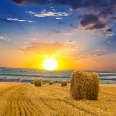 autumn wheat field at the sunset