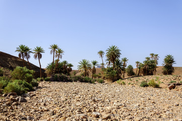 Morocco, Draa Valley, oasis
