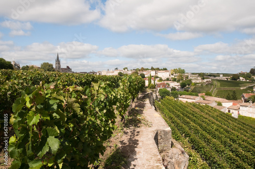Vineyard at Saint-Emilion, France