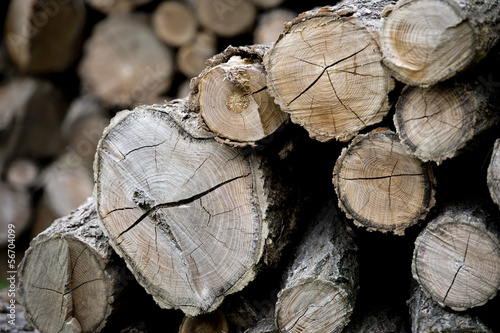 cutted wood for winter