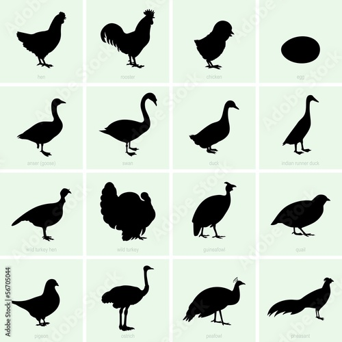 Set of poultry icons
