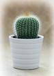 Prickly indoor cactus