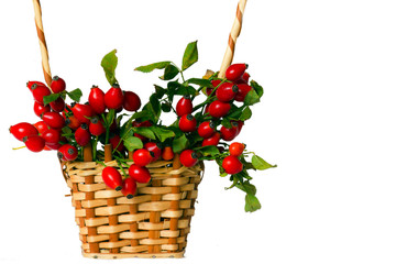 Rose hips in the wicker basket