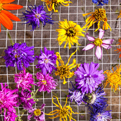 Colorful Drying Flowers