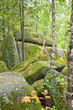 Fototapeten,siberia,states,reserve,naturschutzgebiet