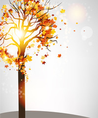 Autumn tree with beautiful leaves