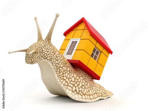 Leinwandbild Motiv Snail with house (clipping path included)