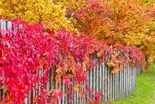 Fotobehang Tuin Colorful Autumn