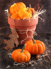 Fresh Miniature Pumpkins in the Pot. Selective focus